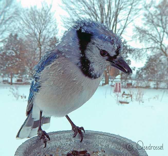 鸟类摄影棚捕捉到鸟类最好看的瞬间-有意思吧