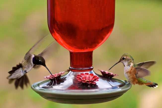 喂食器对鸟类是否安全?-有意思吧