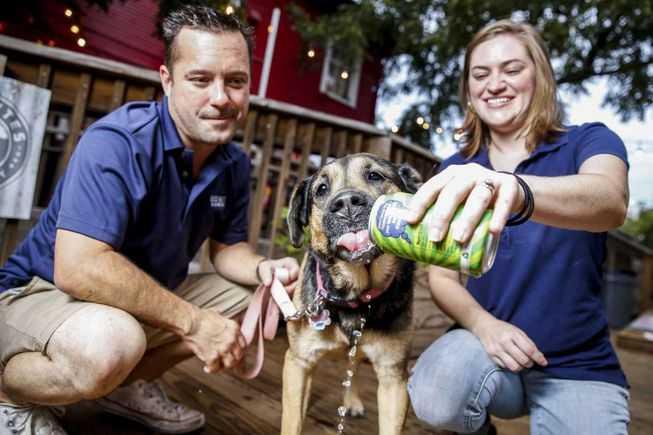 可以给狗狗喝的啤酒-有意思吧