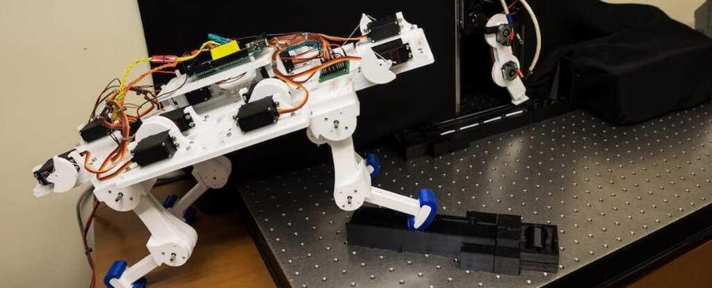 人工智能控制的机器人肢体,不需要编程就能自己走路-有意思吧