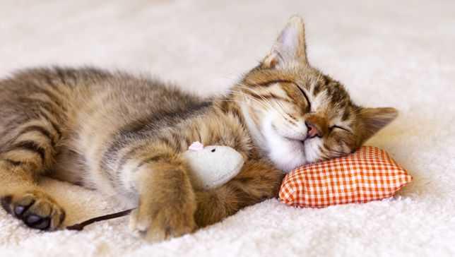 动物们的睡眠时间有点神秘-有意思吧