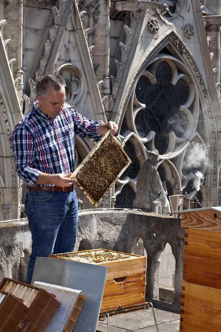 巴黎圣母院的屋顶蜜蜂似乎幸免于难-有意思吧