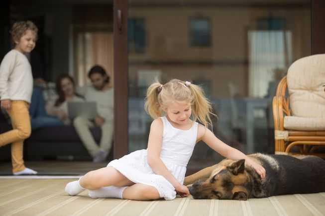 是否喜欢养宠物可能是基因决定的-有意思吧