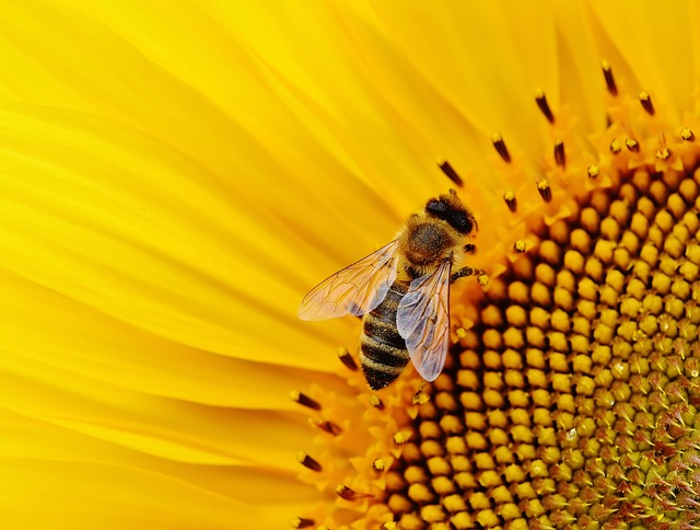 实验表明蜜蜂能够理解数学符号语言-有意思吧
