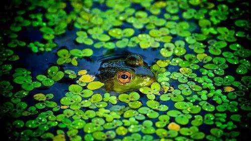 夏日,雨落,蛙鸣-有意思吧