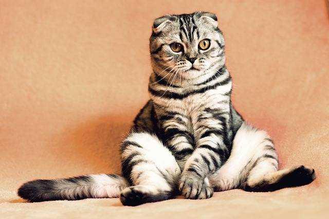 如何正确的撸猫?-有意思吧