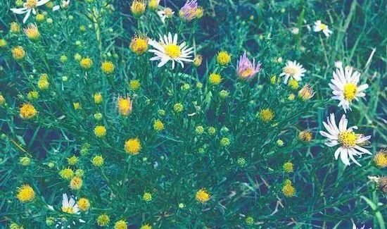 那些花儿与那份鲜活-有意思吧