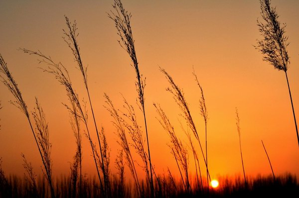 冬天的阳光,游子的心情-有意思吧