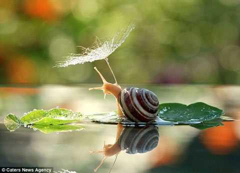 像蜗牛一样爬上井口-有意思吧